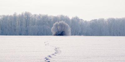 jalanjäljet lumisessa maassa